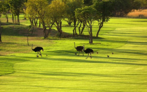 elements-private-golf-reserve_035519_full