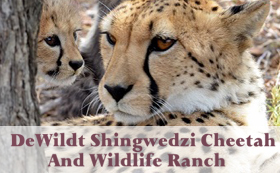DeWildt Shingwedzi Cheetah & Wildlife Ranch