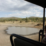 ...we passed many water hole, frequented by the animals.